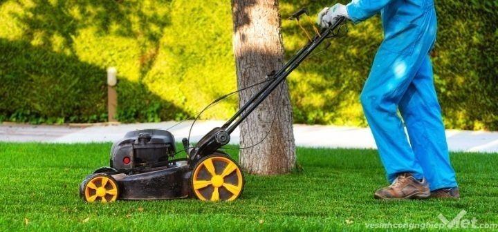 Dịch vụ cắt cỏ và những điều cần biết